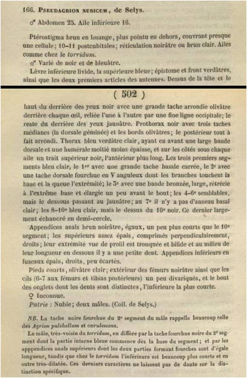 Synopsis des Agrionines, 5me légion: Agrion (suite). Le grand genre Agrion. Bulletin Academie royale Belgique p. 501